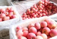 山东建邦集团向黄冈170多家养老机构捐赠50吨苹果